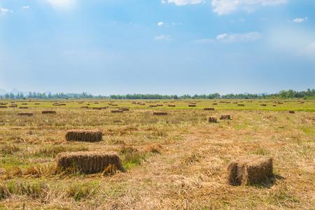 青い空を背景にフィールド中の稲ワラ 写真素材