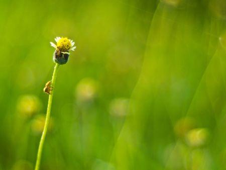 spider  grass top photo