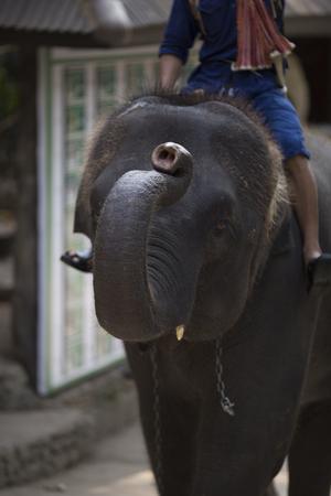 Camp Maesa Elephan à Chiang Mai