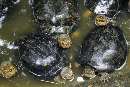 Turtle looking
