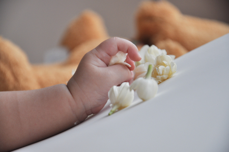 little hand of little baby play with white flowers jasmine