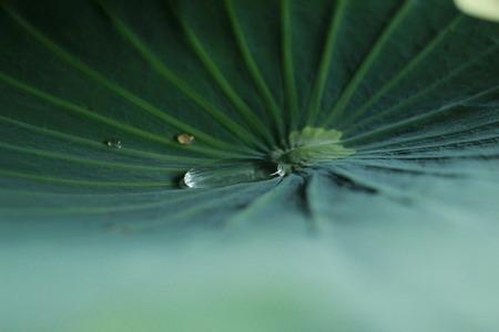 lilypad: nature Stock Photo