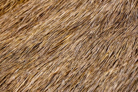 thatched roof: Thatched roof background Stock Photo