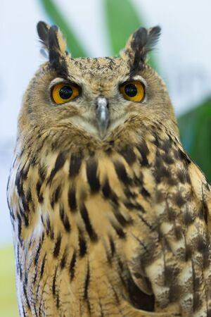 rear end: Eagle Owl