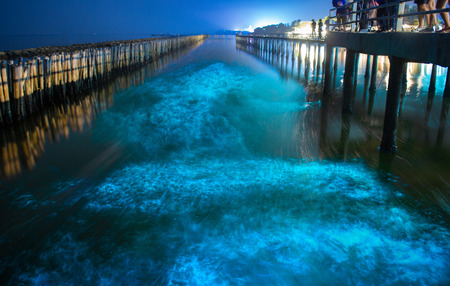 Bioluminescence dans l'eau de mer bleu nuit. Vague fluorescente bleue de plancton bioluminescent sur la forêt de mangrove à Khok Kham, Samut Sakhon près de Bangkok en Thaïlande. Banque d'images