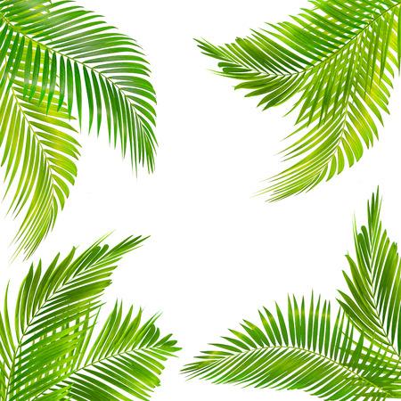 cornice per testo realizzata con foglia di palma verde isolata su sfondo bianco Archivio Fotografico