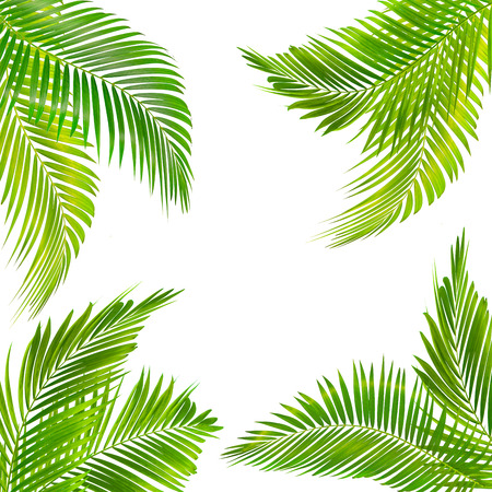 frame for text made from green palm leaf isolated on white background Stock fotó