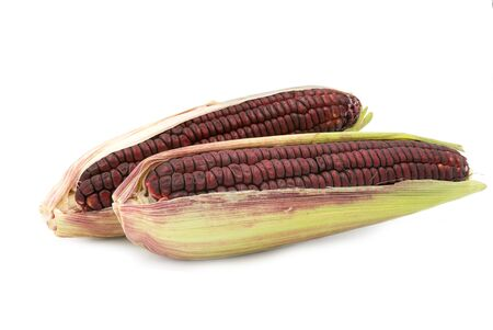 Siam Ruby Queen or Red corn of Thailand is a type of sweet corn. Red corn's kernels are stained with hues of ruby, Can be eaten fresh. The taste is sweet and crisp.