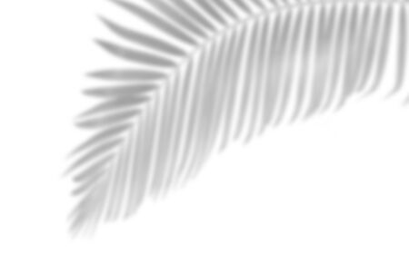 Shadow of palm leaf shadows on white paper background ,summer concept.