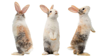 Many different standing poses of three colour cute little rabbits.Lovely action of young rabbits. Reklamní fotografie