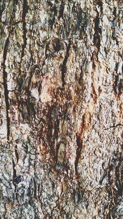 surface: Tree bark surface, background