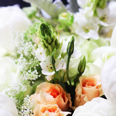 beautiful flowers Stock Photo - 13261015