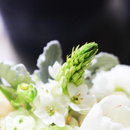 colorize: beautiful flowers Stock Photo