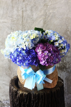 Hortensia flowers photo