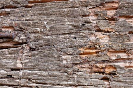 weathered: weathered wood