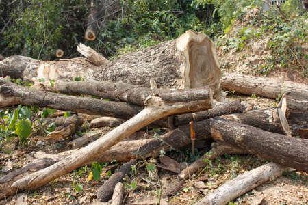 timber cutting: Timber cutting