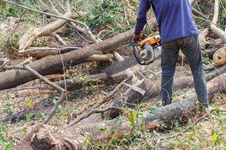 logger: Logger Cut trees