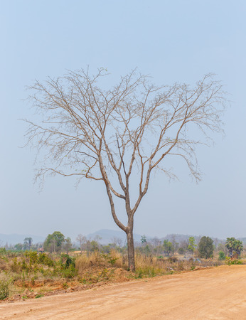 deciduous: Deciduous trees
