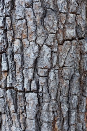 Closeup Bark Background Texture nature Stok Fotoğraf
