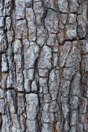 Closeup Bark Background Texture nature Imagens