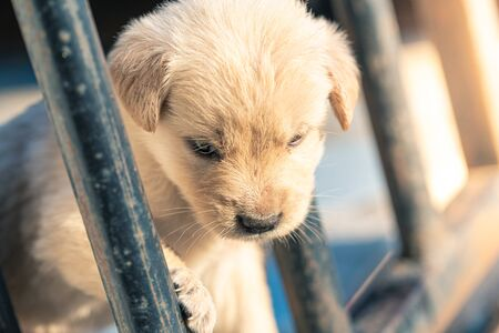 Golden Retriever puppies look in cages detail animal pet art blur Stockfoto