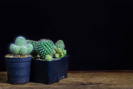 Many cactus species lay on the old wooden background detail nature art