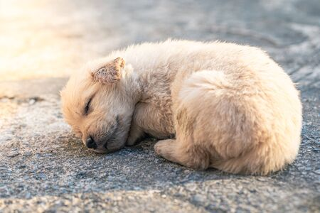 Little dog Golden Retriever is sleeping on the cement floor detail art blur