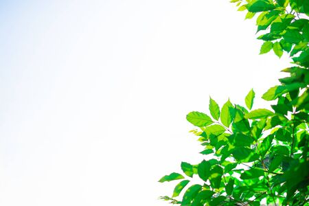 Fresh green leaves on white background detail texture blur art