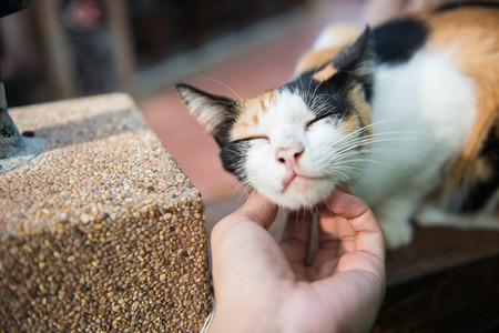 human hands: Human hand caressing a cat