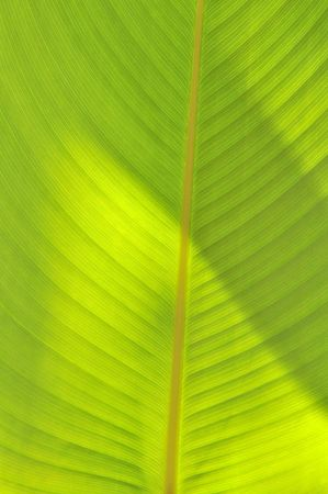 structure of a green leaf Stock Photo - 6803424