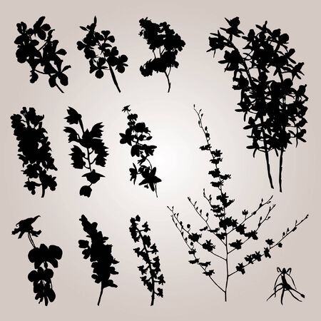 folwer: Plant collection