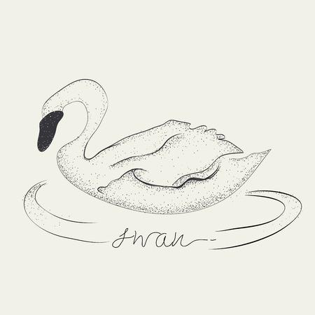 Swan drawing, Vector