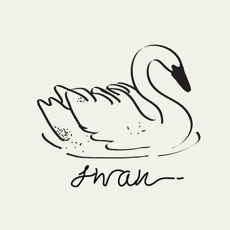 Swan drawing,