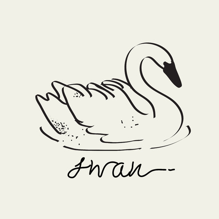 Swan drawing, Vector