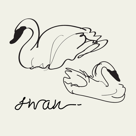 swan lake: Swan drawing,