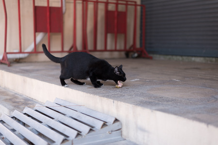 laid back: A homeless black cat wander around the street. She is also pregnant and can be use for animal protection, adoption organization.A homeless black cat wander around the street. She is also pregnant and can be use for animal protection, adoption organization Stock Photo