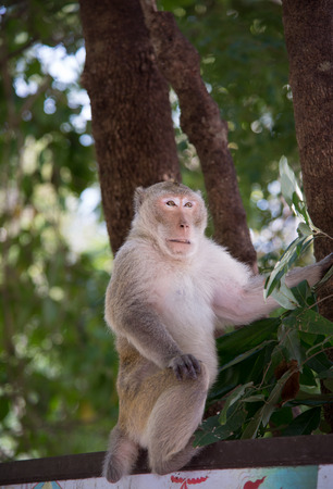behave: Wild monkey among the half construction half natural and behave naturally.  Raw and wild Stock Photo