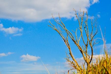 albero secco: Albero secco in estate