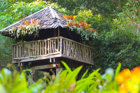 tropical tree: Tropical Tree House