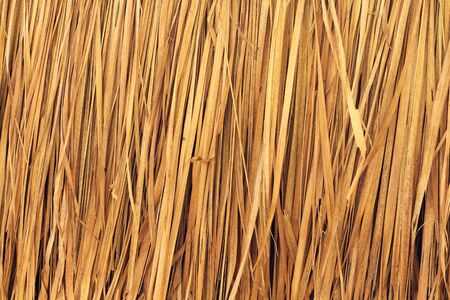 imperata: texture of Thatched from Imperata cylindrica Thailand Stock Photo