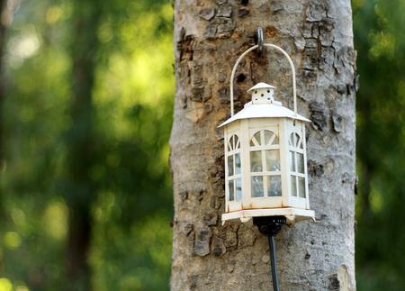 old lamp on tree Stock Photo