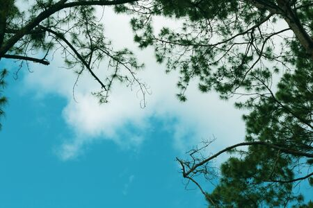 greenness: blue sky clouds and trees