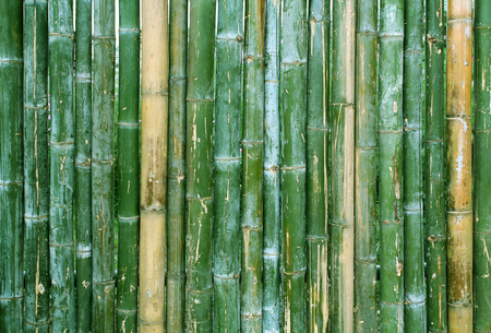 Green bamboo fence texture background. Stock Photo