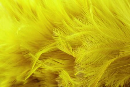 golden yellow feathers texture with high resolution for background and design. Reklamní fotografie - 124553510