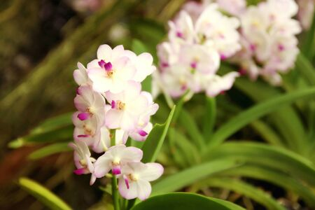 Close up of orchids bouquet with natural background, beautiful blooming orchid flower in the garden. 免版税图像