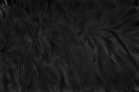 Blur beautiful black grey bird feathers pattern for background and design art work.