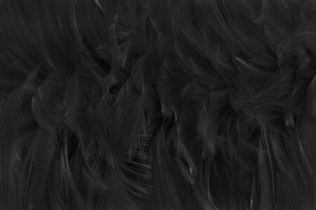 Beautiful black grey bird feathers pattern texture background. 版權商用圖片