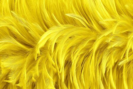 Beautiful golden yellow bird feathers pattern texture background. 版權商用圖片