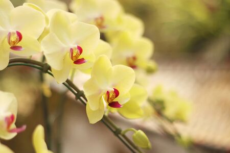Close up of orchids bouquet with natural background, beautiful blooming orchid flower in the garden. 版權商用圖片