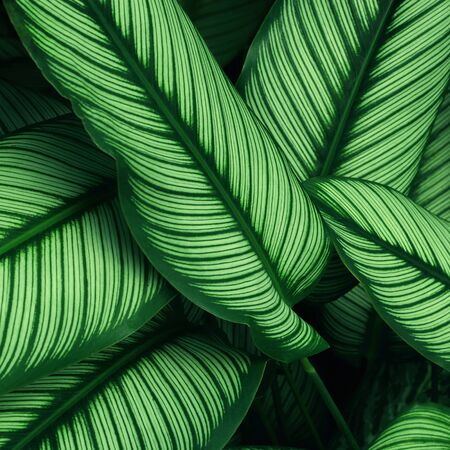 Close up of green leaf texture in tropical forest for background and desing art work eco nature concept style.